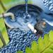 Impianto biologico per la purificazione d'acqua di rifiuto